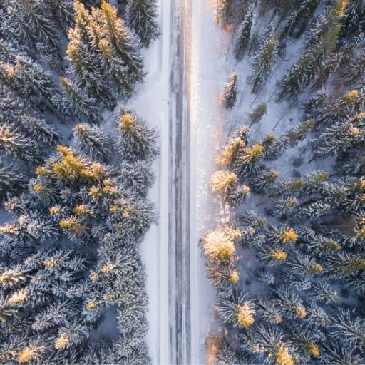 Comment bien vivre le changement de saison ? (atelier nature *coaching d'hiver*)